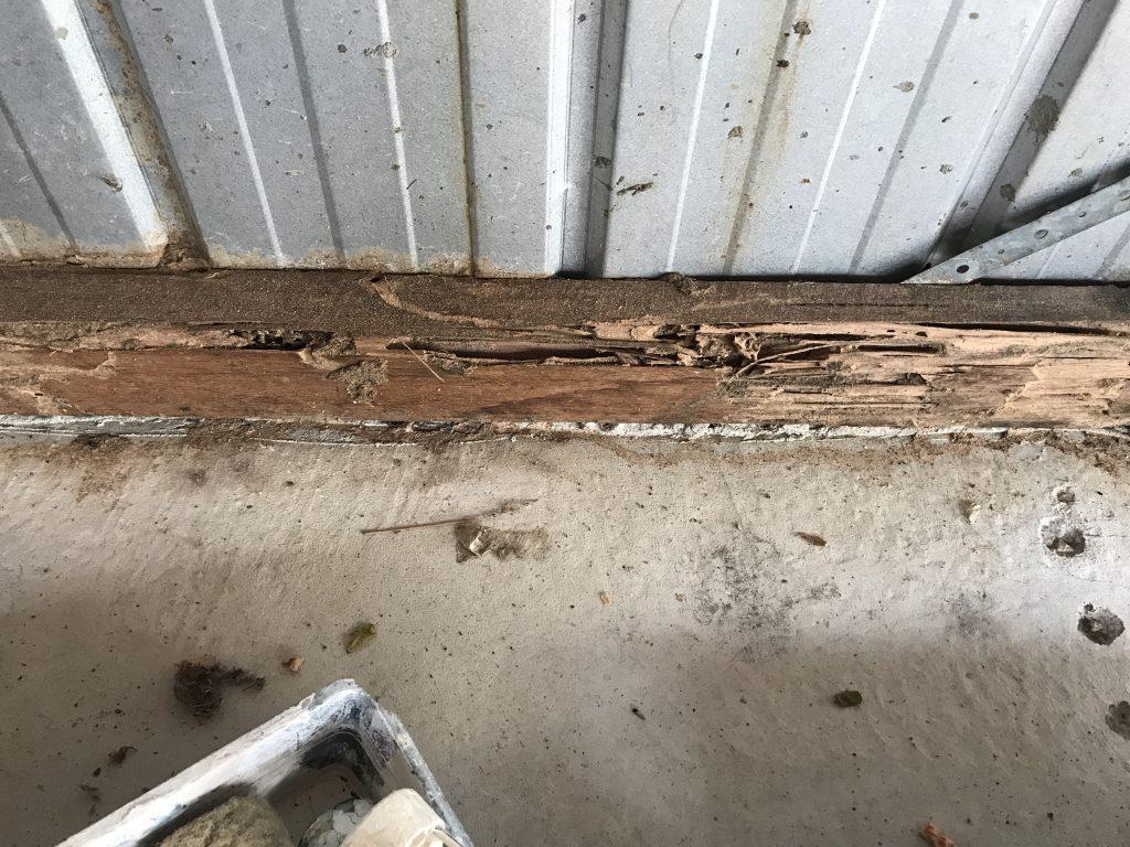 Termite In Garage